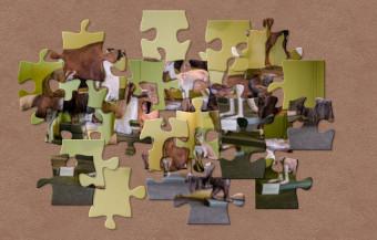 Ein ungeordnetes Puzzle